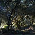 Многие оливы Корфу не подвергались обрезкев течение сотен лет, и в результате даже в самый жаркий день в рощах царят тень и прохлада