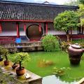 Чайная плантация в Ханчжоу