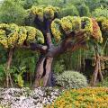 Ботанический сад в Шанхае