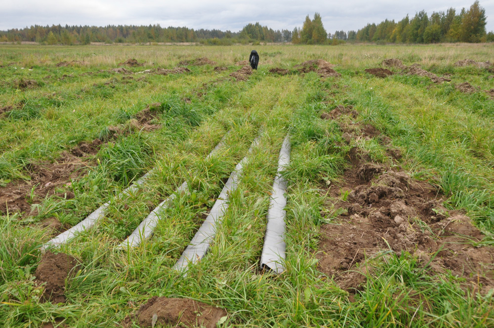 Нормативы затрат на выращивание деревьев кустарников 63
