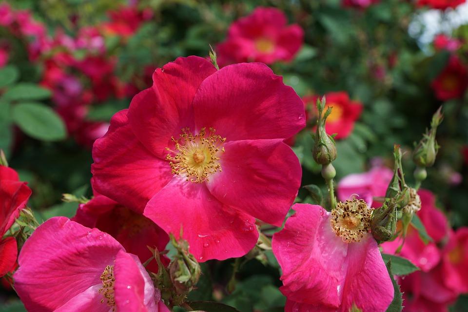Научное описание цветов