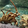 Подводный аквариум в Окленде