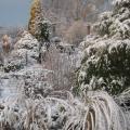 Зимний сад Ирины Пыжиковой