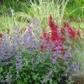 Травы в миксбордере
