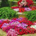 Яркие, броские краски декоративных растений противопоказаны саду-аристократу
