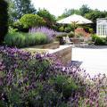 """О малых садах Энтони Пол говорит: """"Хороший дизайн и чувство пропорций приобретают ещё большее значение в малом саду"""""""