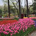 Старинный дворцовый парк Эмирган (Park Emirgan)
