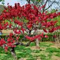 Пекинский Ботанический сад