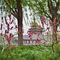 Поездка в Китай в 2016 году